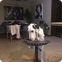 Adopt A Pet :: Jules - Las Vegas, NV