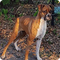 Adopt A Pet :: Lola - Plant City, FL