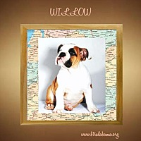 Adopt A Pet :: Willow - Alabaster, AL