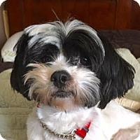 Adopt A Pet :: Gussi Moran - Euless, TX