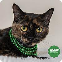 Adopt A Pet :: Nagini - Wyandotte, MI