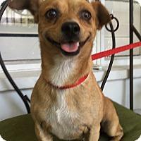 Adopt A Pet :: Winston (BH) - Santa Ana, CA