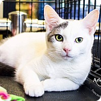 Adopt A Pet :: A..  Emily - Mooresville, NC