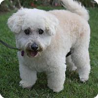 Adopt A Pet :: RICHMOND - Newport Beach, CA