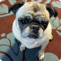 Adopt A Pet :: Cherokee - Grapevine, TX