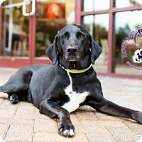 Adopt A Pet :: Beasley - Huntersville, NC