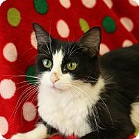 Adopt A Pet :: Cheyenne - Yucaipa, CA