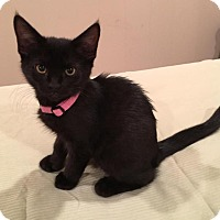 Adopt A Pet :: Sweetie - Scottsdale, AZ
