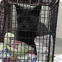 Adopt A Pet :: A015569 - Tavares, FL