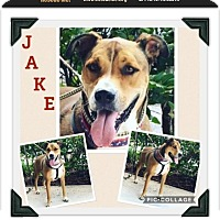 Adopt A Pet :: Jake - Homestead, FL