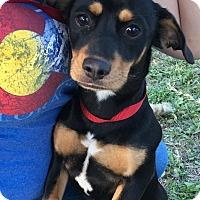 Adopt A Pet :: Wendy (JD) - Santa Ana, CA