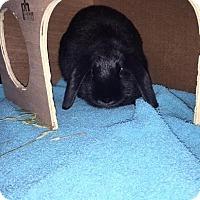 Adopt A Pet :: LUNA - Methuen, MA