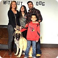 Adopt A Pet :: Leila ADOPTED - Goodyear, AZ