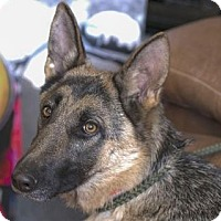 Adopt A Pet :: Annika - Ridgway, CO