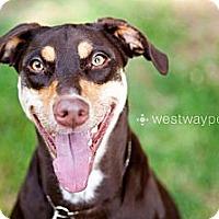 Adopt A Pet :: Coco - Santee, CA