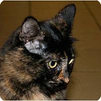Adopt A Pet :: Prada - Bonita Springs, FL