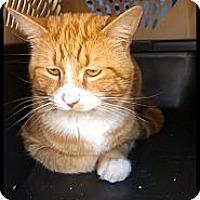 Adopt A Pet :: Milo - Aiken, SC