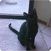 Adopt A Pet :: Kyle - San Ramon, CA