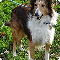 Adopt A Pet :: Sam - Charlottesville, VA