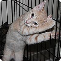 Adopt A Pet :: Walt - Secaucus, NJ