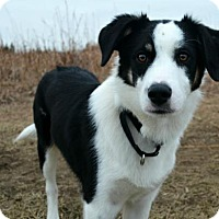 Adopt A Pet :: Eoghan - Bellevue, NE