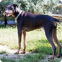 Adopt A Pet :: ANNJI - Greensboro, NC