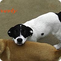 Adopt A Pet :: Everly - Alpharetta, GA