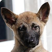 Adopt A Pet :: Breeze AD 01-23-16 - Preston, CT