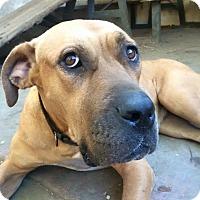 Adopt A Pet :: Big Mama - Van Nuys, CA