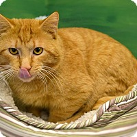 Adopt A Pet :: Houdini - Byron Center, MI