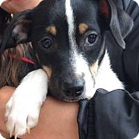 Adopt A Pet :: Montana (11 lb) Video! - SUSSEX, NJ