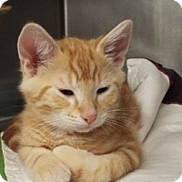 Adopt A Pet :: Simba - Grants Pass, OR