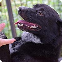 Adopt A Pet :: Baby Girl $125 - Seneca, SC