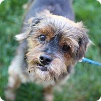 Adopt A Pet :: Jojo D161101 - Edina, MN