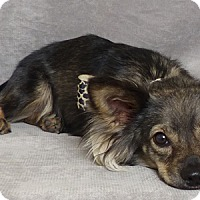 Adopt A Pet :: Redford - Kerrville, TX