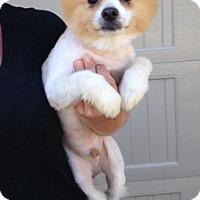 Adopt A Pet :: Princeton - Temecula, CA