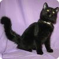 Adopt A Pet :: Zaina - Powell, OH