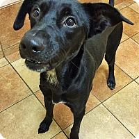 Adopt A Pet :: Jou-Yung *Petsmart GB* - Appleton, WI