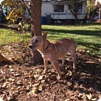 Adopt A Pet :: HAYLI - Elk Grove, CA