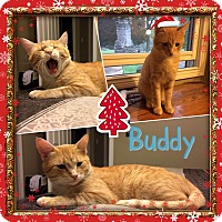 Adopt A Pet :: Buddy - Jeffersonville, IN