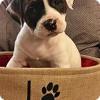Adopt A Pet :: Thelma - Miramar, FL