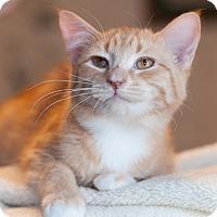 Adopt A Pet :: Shoreline - Faribault, MN