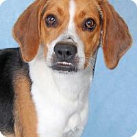 Adopt A Pet :: Walker - Encinitas, CA