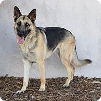 Adopt A Pet :: Luca - San Diego, CA