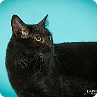 Adopt A Pet :: Jordan - St. Louis, MO