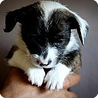 Adopt A Pet :: Macchiato - Oceanside, CA