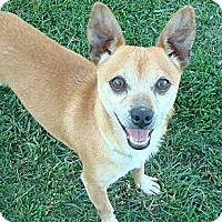 Adopt A Pet :: Herbie - Poway, CA