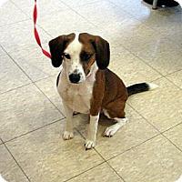 Adopt A Pet :: Ada - Ludington, MI