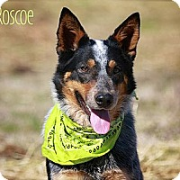 Adopt A Pet :: Roscoe - Flowery Branch, GA