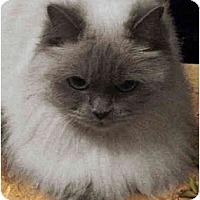 Adopt A Pet :: Clarissa - Davis, CA